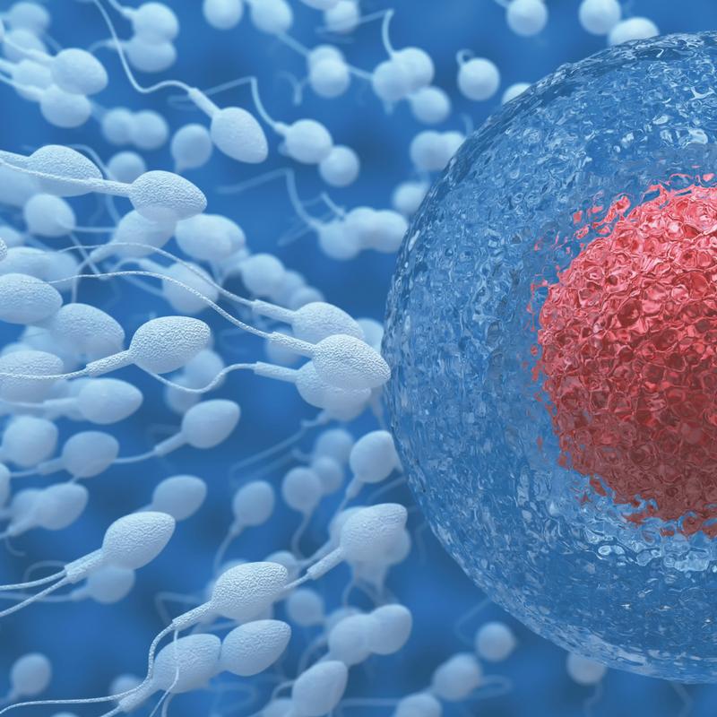 Ποια είναι η καλύτερη φαρμακευτική αγωγή εξωσωματικής γονιμοποίησης σε γυναίκες με ενδομητρίωση;