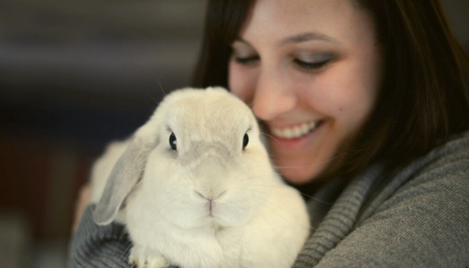 Bioengineering repairs uterus resulting in live births in rabbits