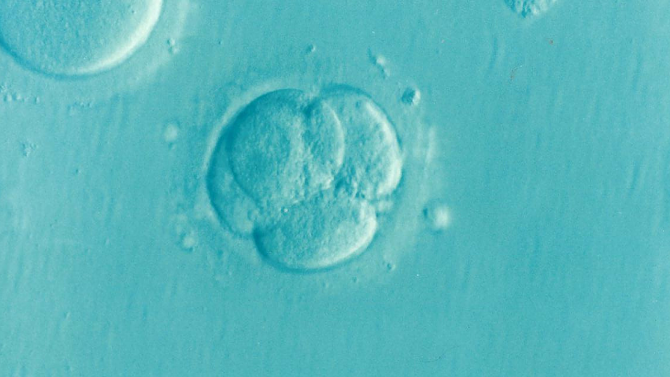 System trained to detect highest quality IVF embryos outperformed trained embryologists
